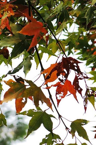 12.1. leaves 4x6 (17)