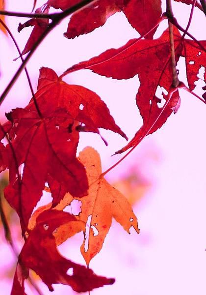 12.1. leaves 4x6(34)