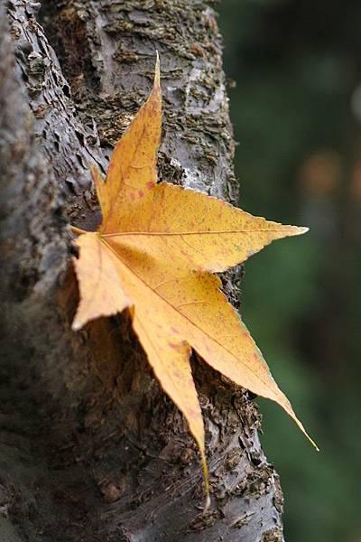 tree& leaf 4x6