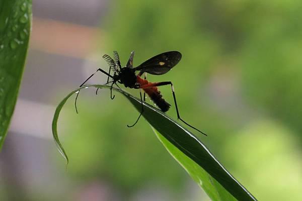 4.7.14 flys (10)