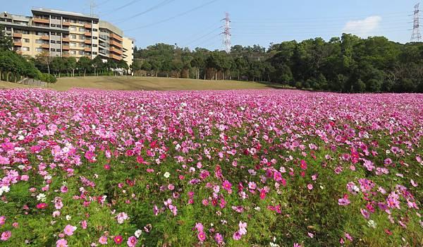 1.22.15. flower (5)