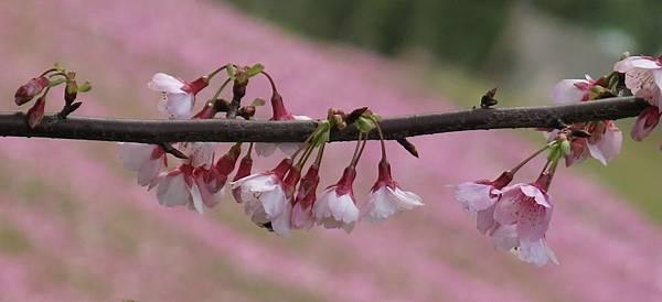 1.29.15 spring (12)