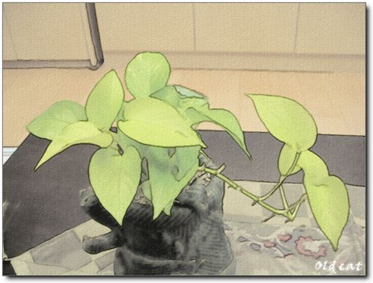 PLANT 002.jpg