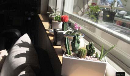 plants & me 004.jpg