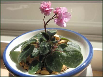 plants & me 002.jpg