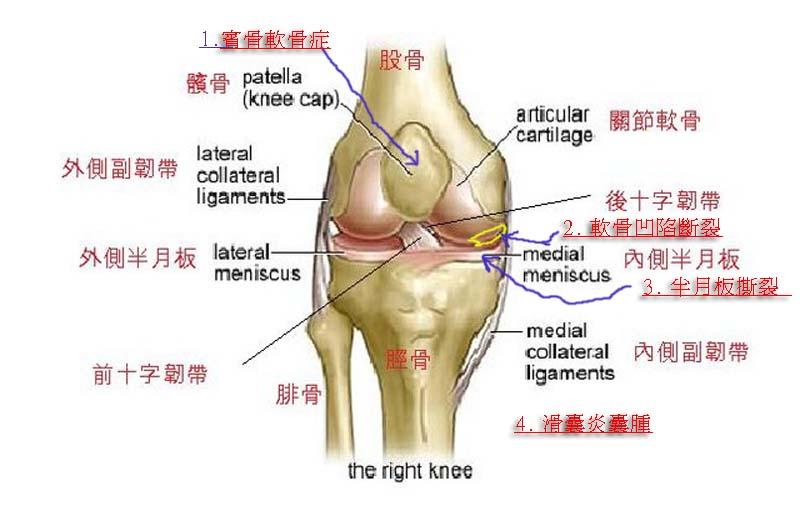 R knee.jpg