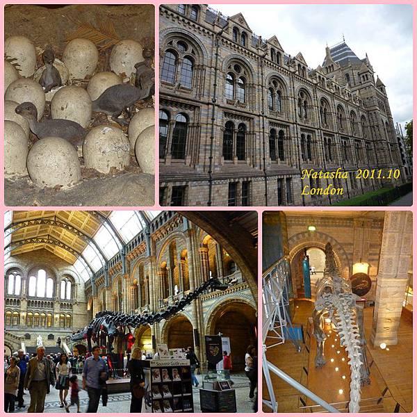 1004 自然博物館.jpg