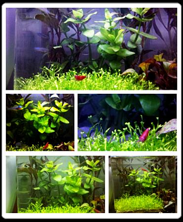 [寵物水族]  花小錢  用小魚缸  種出美麗水草缸!!!!