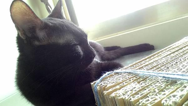 【喵星人】自製簡易貓抓板   寵愛貓咪不花錢