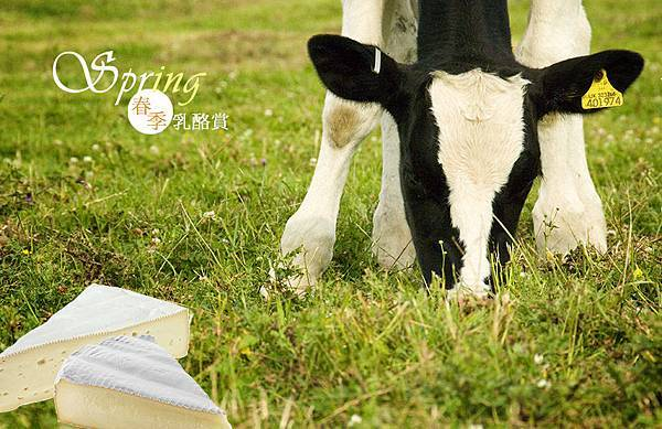 spring_cheese.jpg