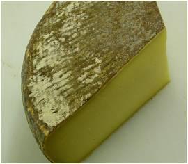 多姆乳酪.jpg