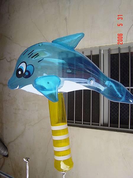 海豚槌~54cm
