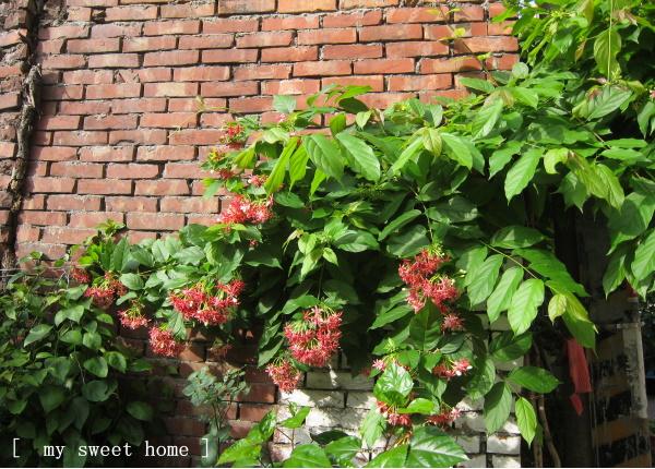 牆上的紅花兒.jpg