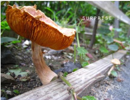 小蘑菇森林.jpg