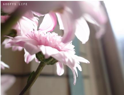 花攤八.jpg