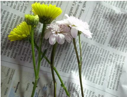 花攤五.jpg