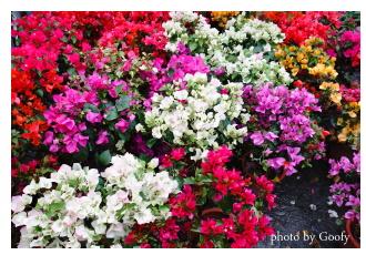 公路花園的花