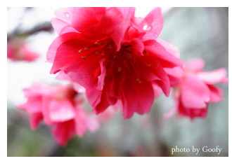 公路花園的花1