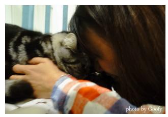 愛貓的Niki
