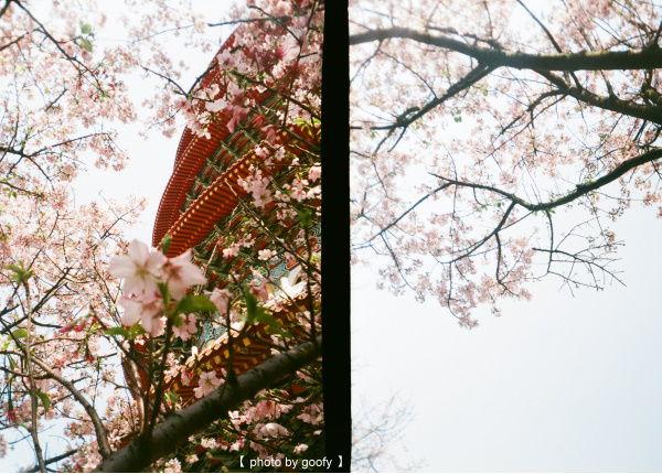 花現,一團粉嫩六.jpg