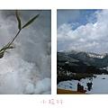 山頂上的雪地四.jpg