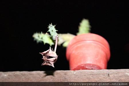 20120917點美閣-閉花 (2)
