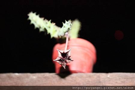 20120917點美閣-閉花