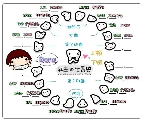 Dora長牙時間表.jpg