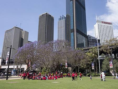 城市裡的紫花樹下,孩子們的戶外交學即將開始