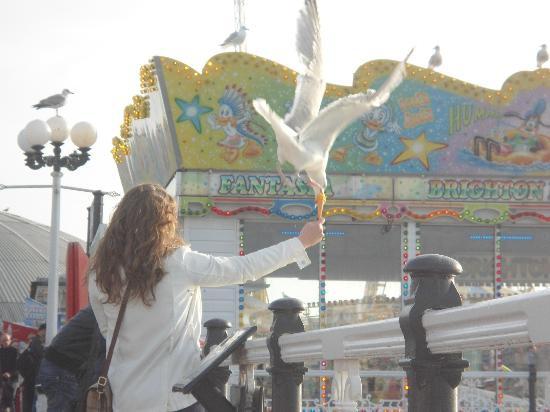 Brighton 看海鷗搶食
