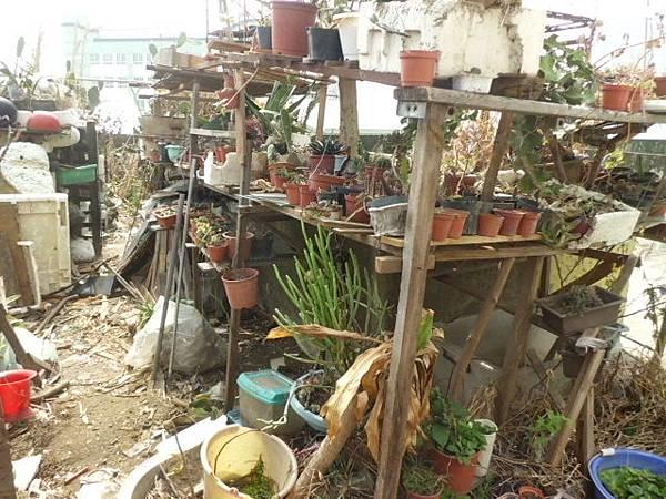 尚未經颱風考驗的花架