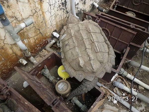 大鱷龜 (1).JPG