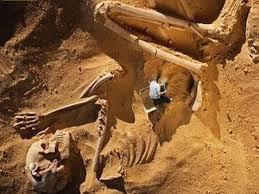 巨人骸骨1.jpg