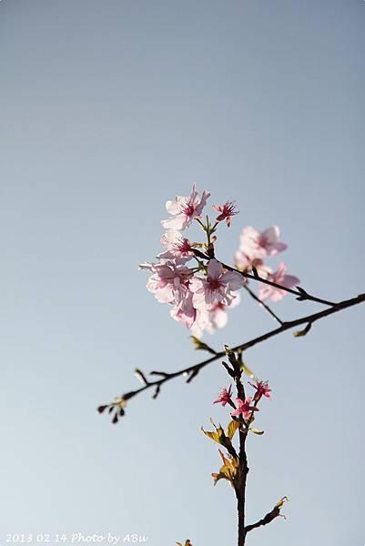 芬園花卉生產休憩園區 (20)