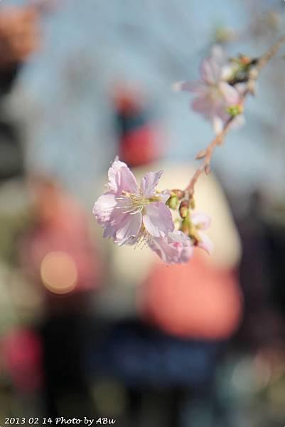 芬園花卉生產休憩園區 (2)