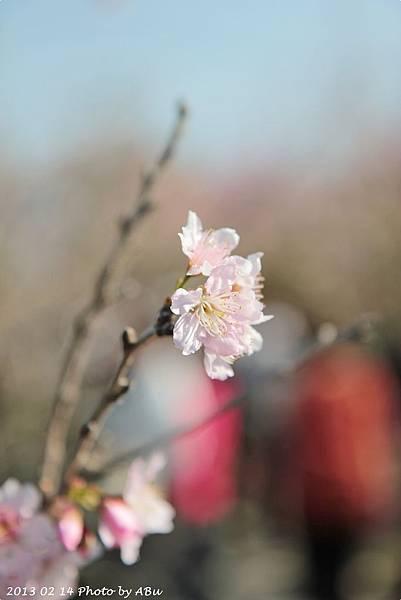 芬園花卉生產休憩園區 (3)