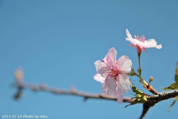 芬園花卉生產休憩園區 (4)