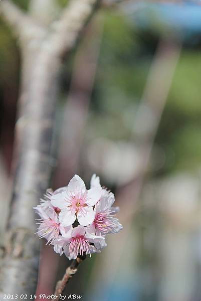 芬園花卉生產休憩園區 (5)