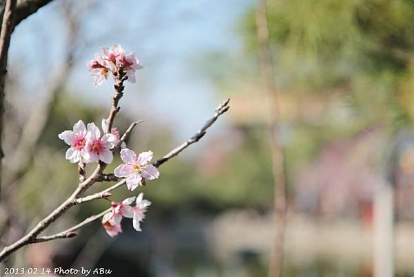 芬園花卉生產休憩園區 (6)