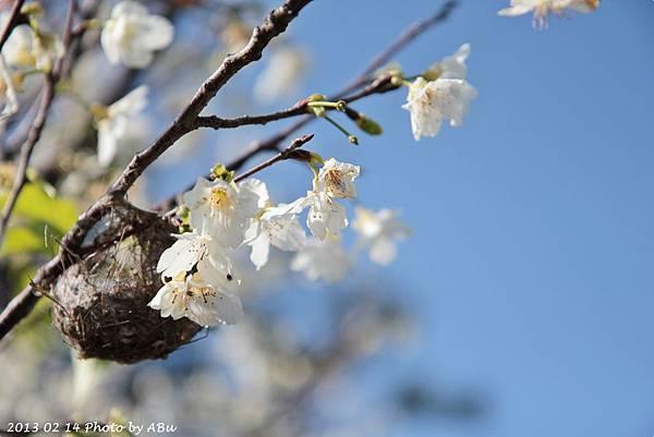 芬園花卉生產休憩園區 (7)