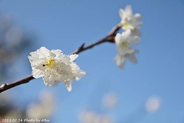 芬園花卉生產休憩園區 (8)