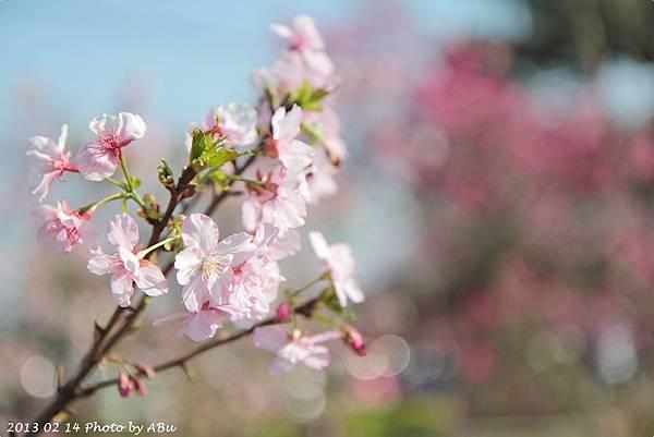 芬園花卉生產休憩園區 (9)