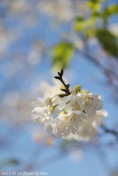 芬園花卉生產休憩園區 (10)