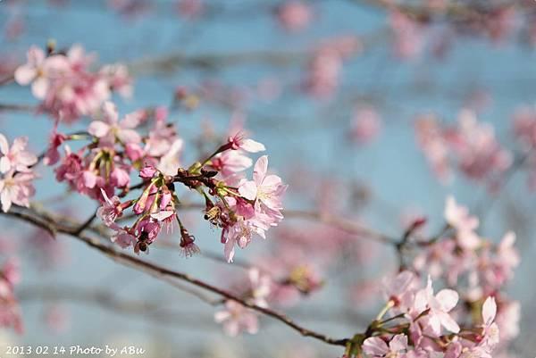 芬園花卉生產休憩園區 (12)