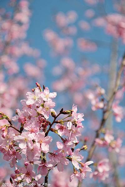 芬園花卉生產休憩園區 (14)
