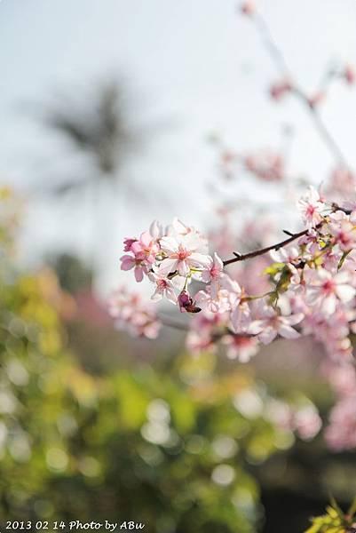 芬園花卉生產休憩園區 (15)