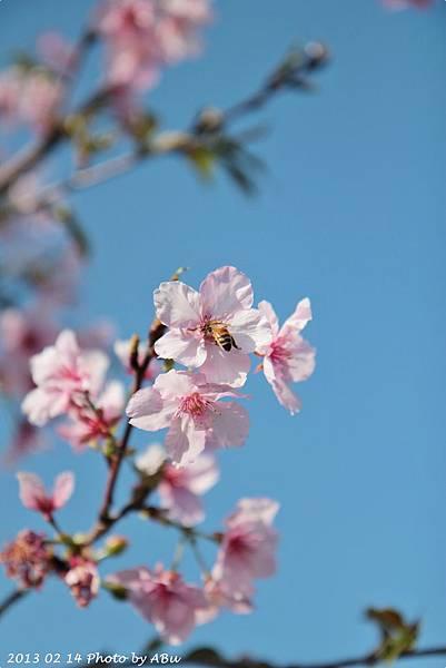 芬園花卉生產休憩園區 (17)
