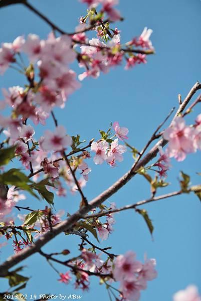 芬園花卉生產休憩園區 (18)