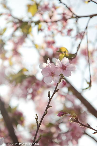 芬園花卉生產休憩園區 (19)