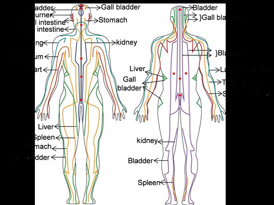 (左)十脈輪系統和十二經絡的前視圖,(右)後視圖